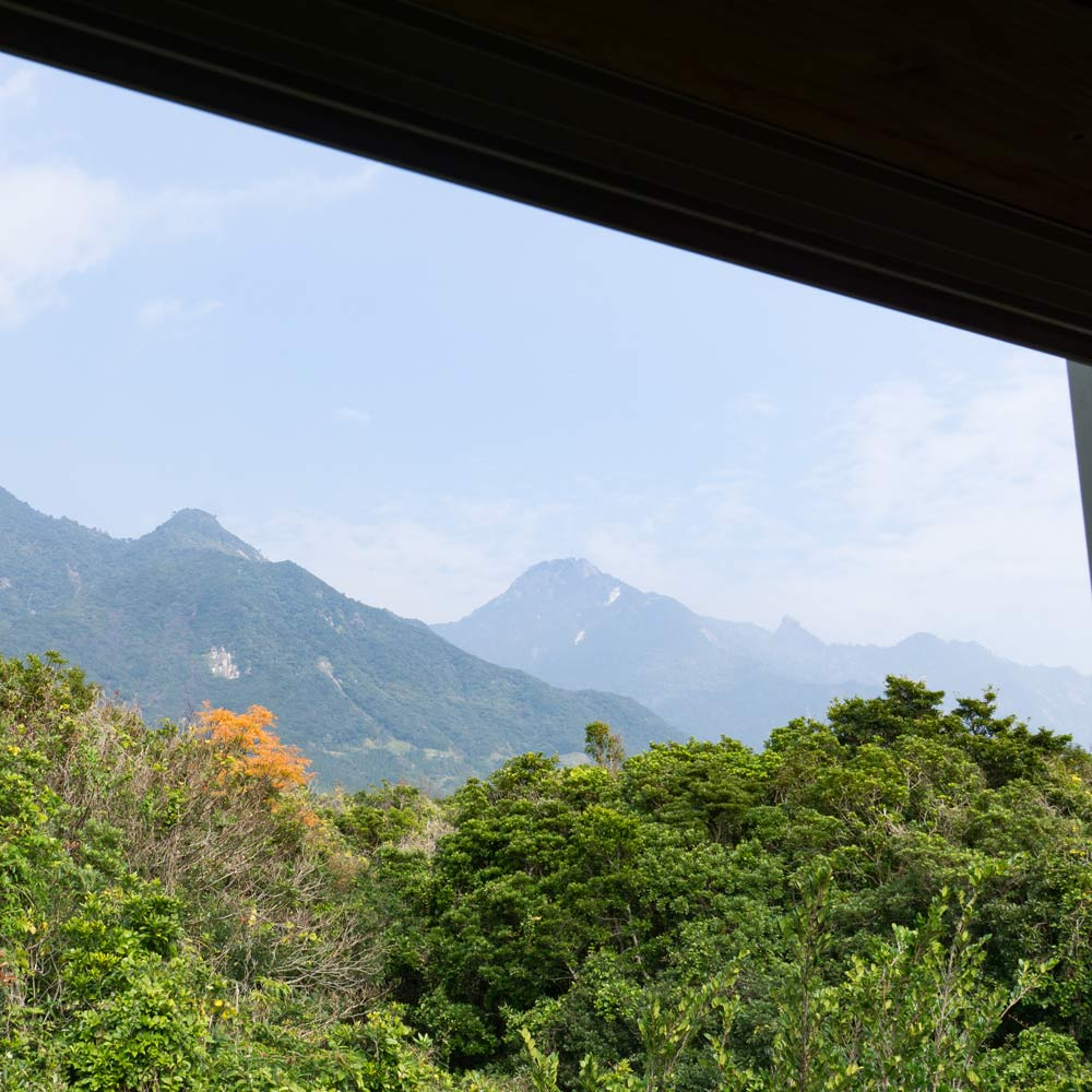 屋久島山暮らし、ジュエリー作り。kiinaさんのふんわりロールケーキ。緋寒桜も咲き始めました!