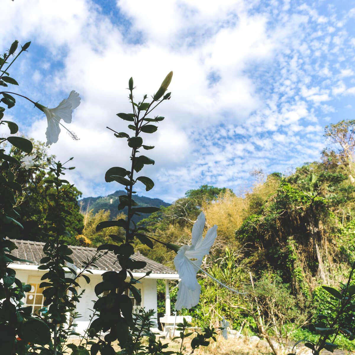屋久島しずくギャラリー外観 屋久島の白いハイビスカス 青空 オーダーメイドジュエリーの販売