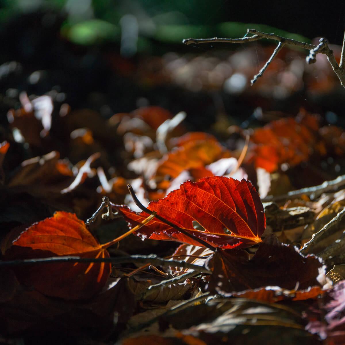 紅葉 落葉 屋久島 白谷雲水峡 屋久島森とジュエリー オーダーメイドジュエリーのインスピレーション