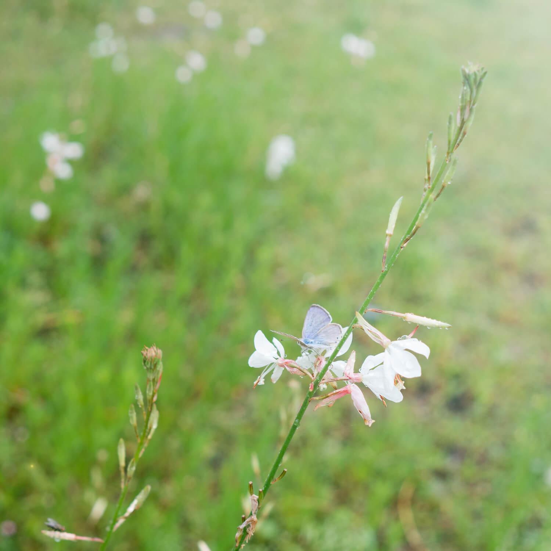 屋久島の花、蝶々 屋久島日々の暮らしとジュエリー オーダーメイドマリッジリングのインスピレーション