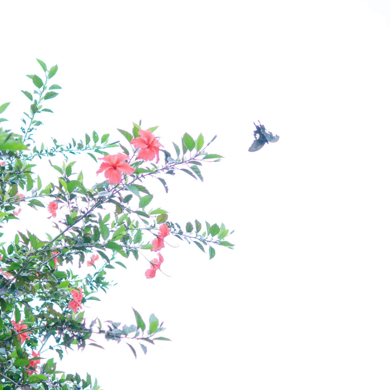 場面2 屋久島のチョウチョ、ハイビスカス 屋久島日々の暮らしとジュエリー オーダーメイドマリッジリングのモチーフ 屋久島でつくる結婚指輪