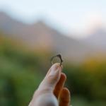 オーダーメイドエンゲージリング ジュエリーのアトリエ 屋久島の緑バック シャンパンゴールド 屋久島でつくる結婚指輪