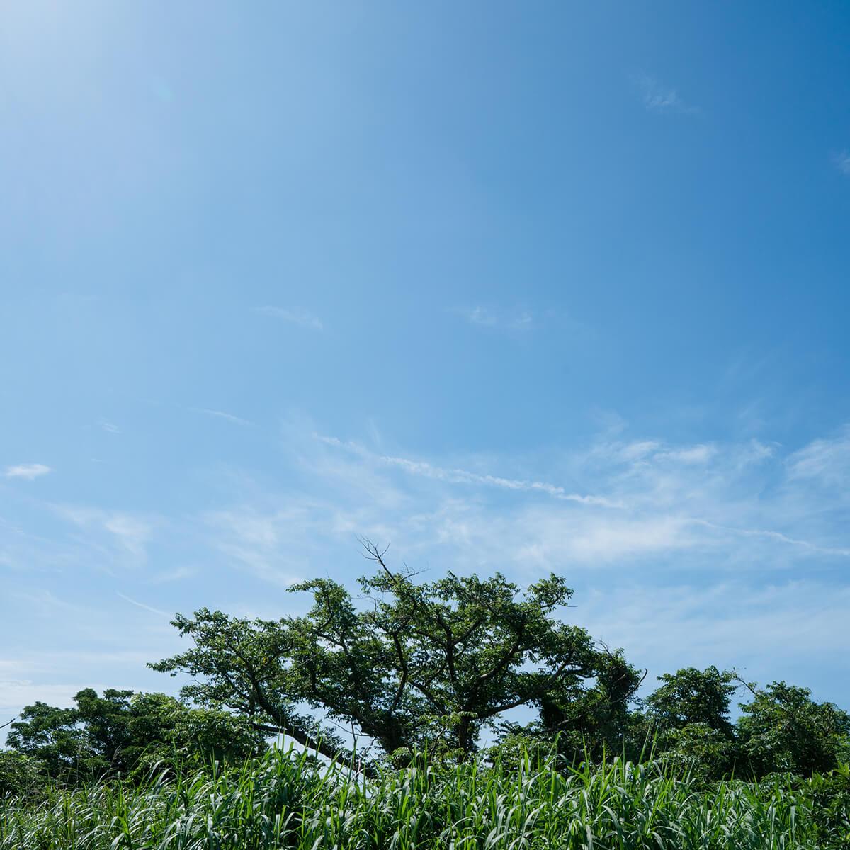屋久島の夏空 屋久島日々の暮らしとジュエリー オーダーメイドマリッジリングのモチーフ 屋久島でつくる結婚指輪