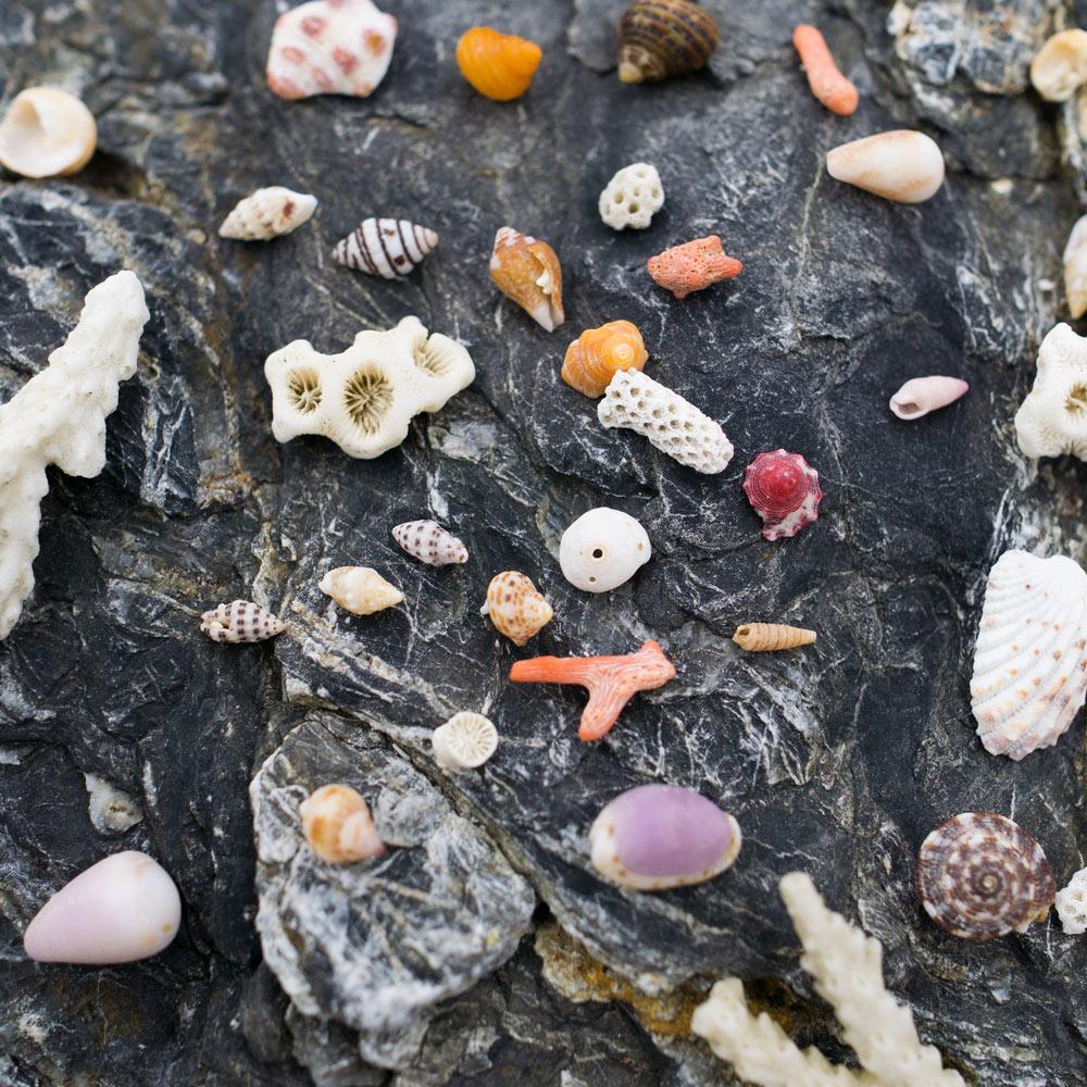 貝殻!たくさん貝殻!   #屋久島 海とジュエリーと