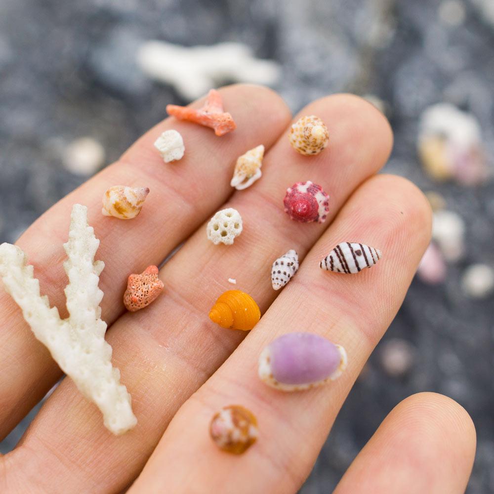 屋久島の貝殻 屋久島海とジュエリーと