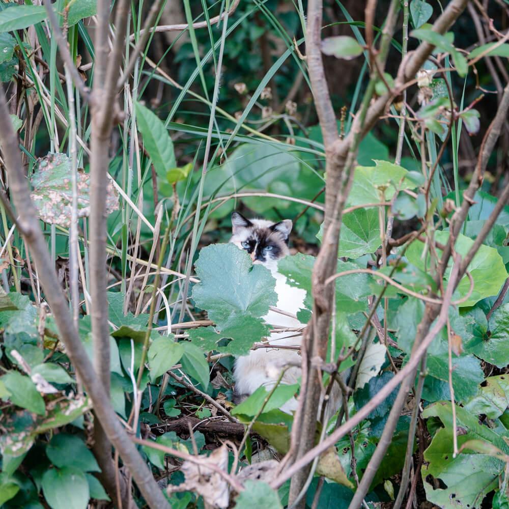 茂みの中の猫 屋久島日々の暮らしとジュエリー