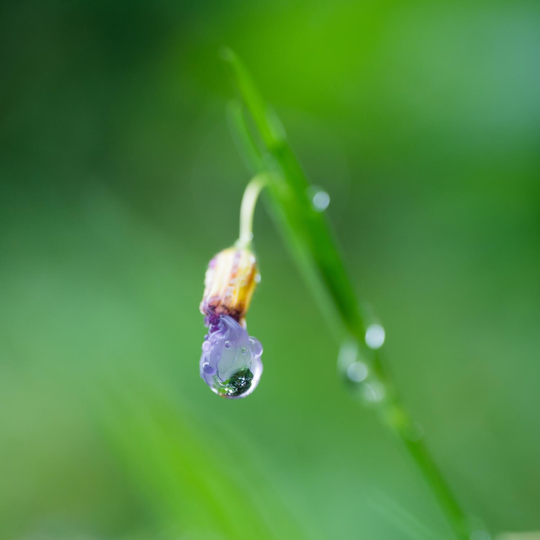 屋久島雨上がり しずく 屋久島雨とジュエリー オーダーメイドマリッジリングのインスピレーション
