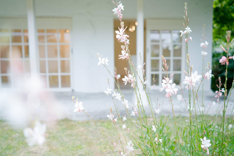屋久島しずくギャラリー 庭、花 屋久島でオーダーメイドマリッジリングの展示、販売 屋久島でつくる結婚指輪