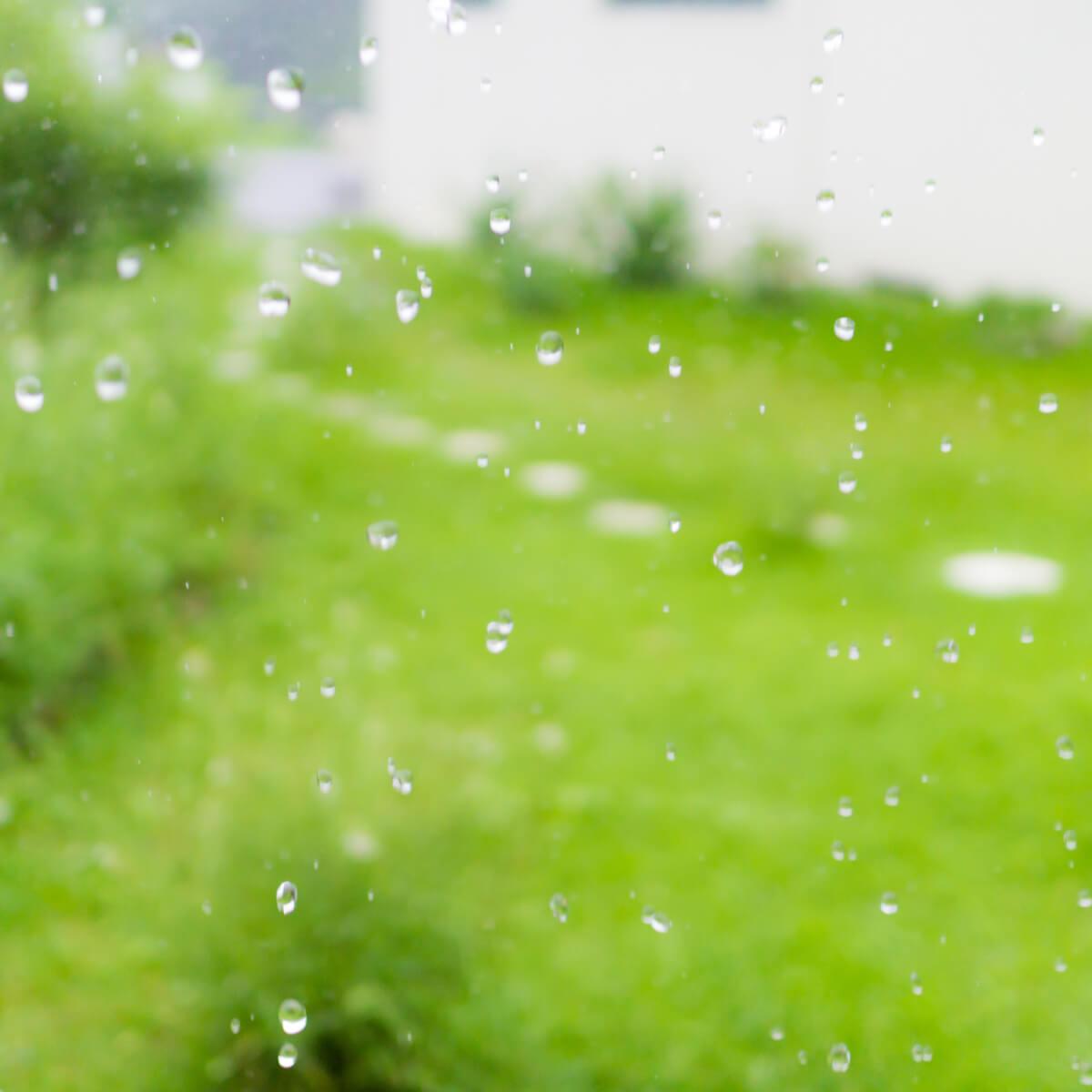 屋久島しずくギャラリーの芝生 雨のしずく 屋久島雨とジュエリー オーダーメイドジュエリーの販売