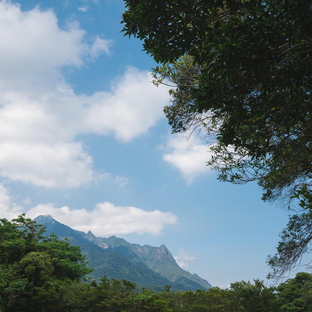屋久島の山々、空 屋久島日々の暮らしとジュエリー オーダーメイドマリッジリングの制作途中