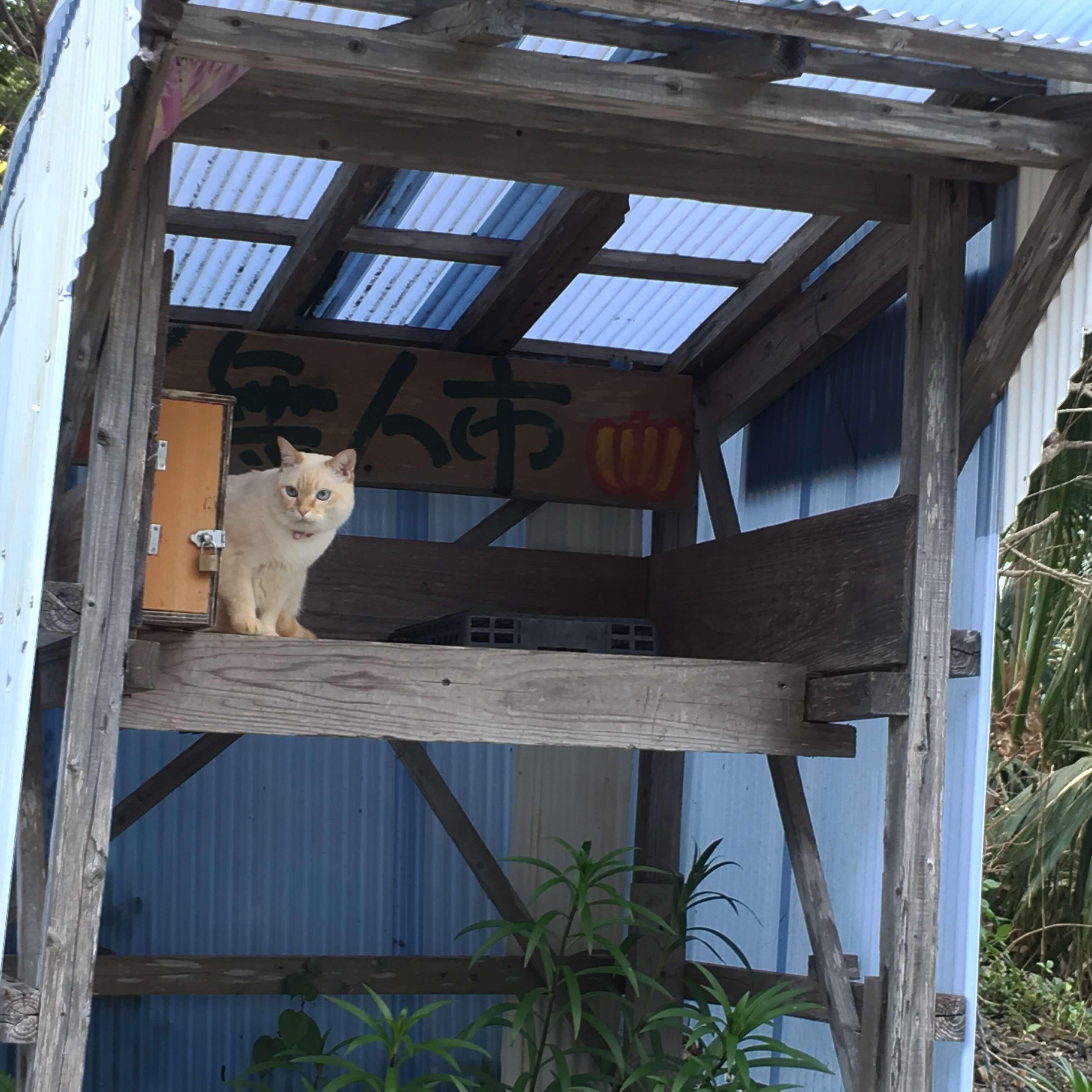無人市場に猫 屋久島日々の暮らしとジュエリー 屋久島でつくる結婚指輪