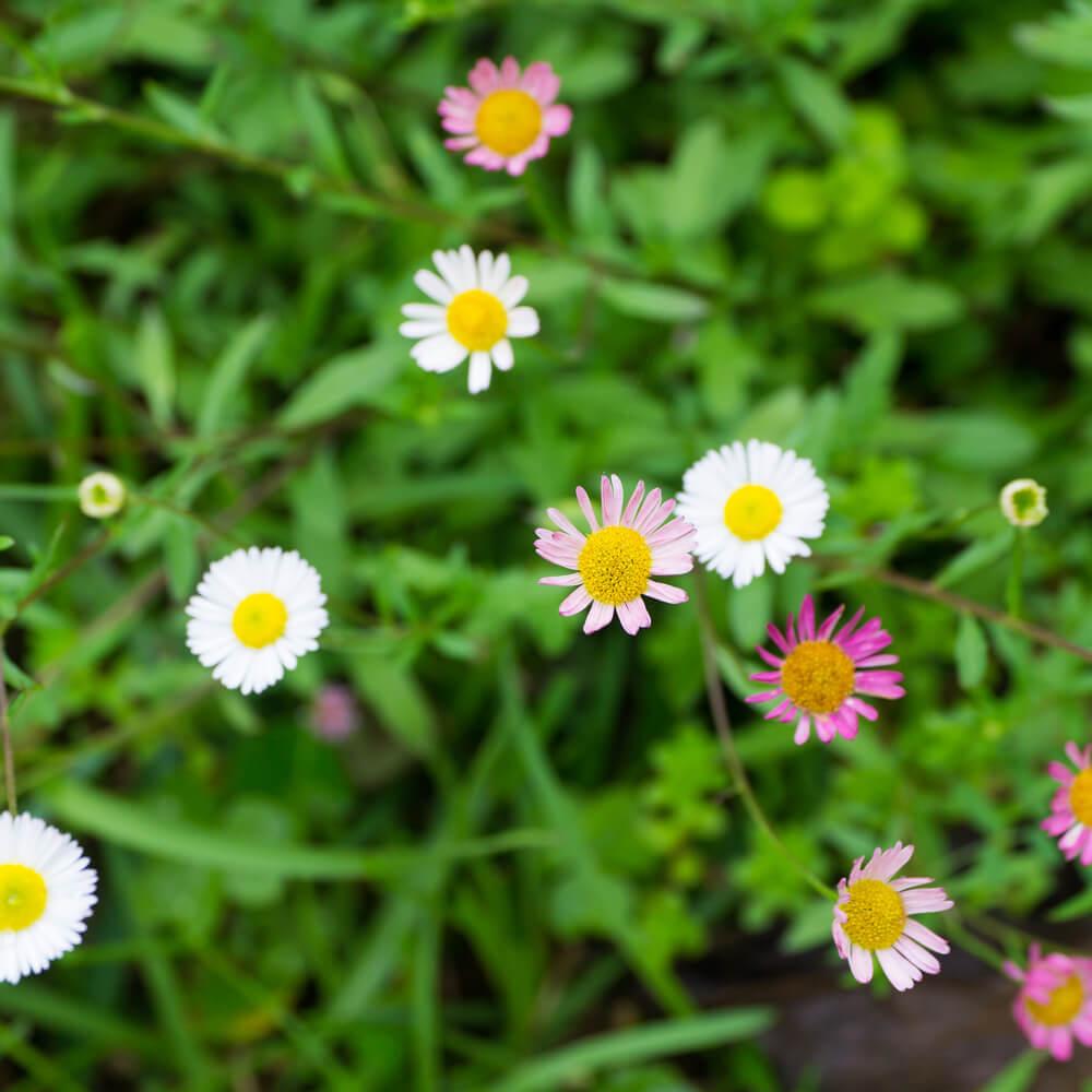 屋久島春の花 オーダーメイドマリッジリングのモチーフ 屋久島花とジュエリー