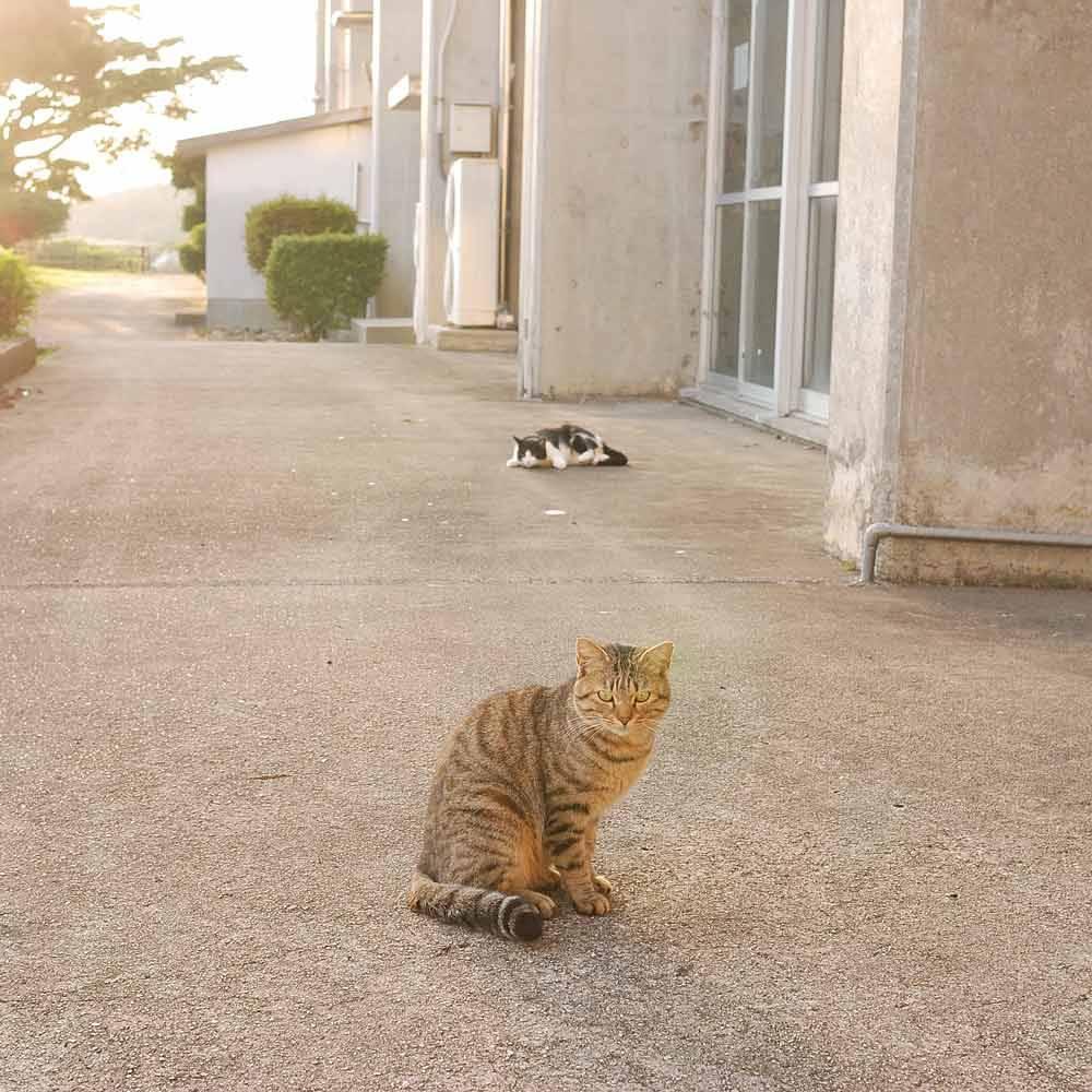 屋久島の猫