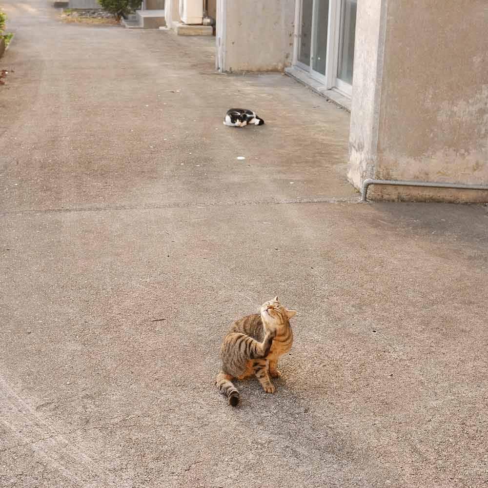 屋久島の猫3