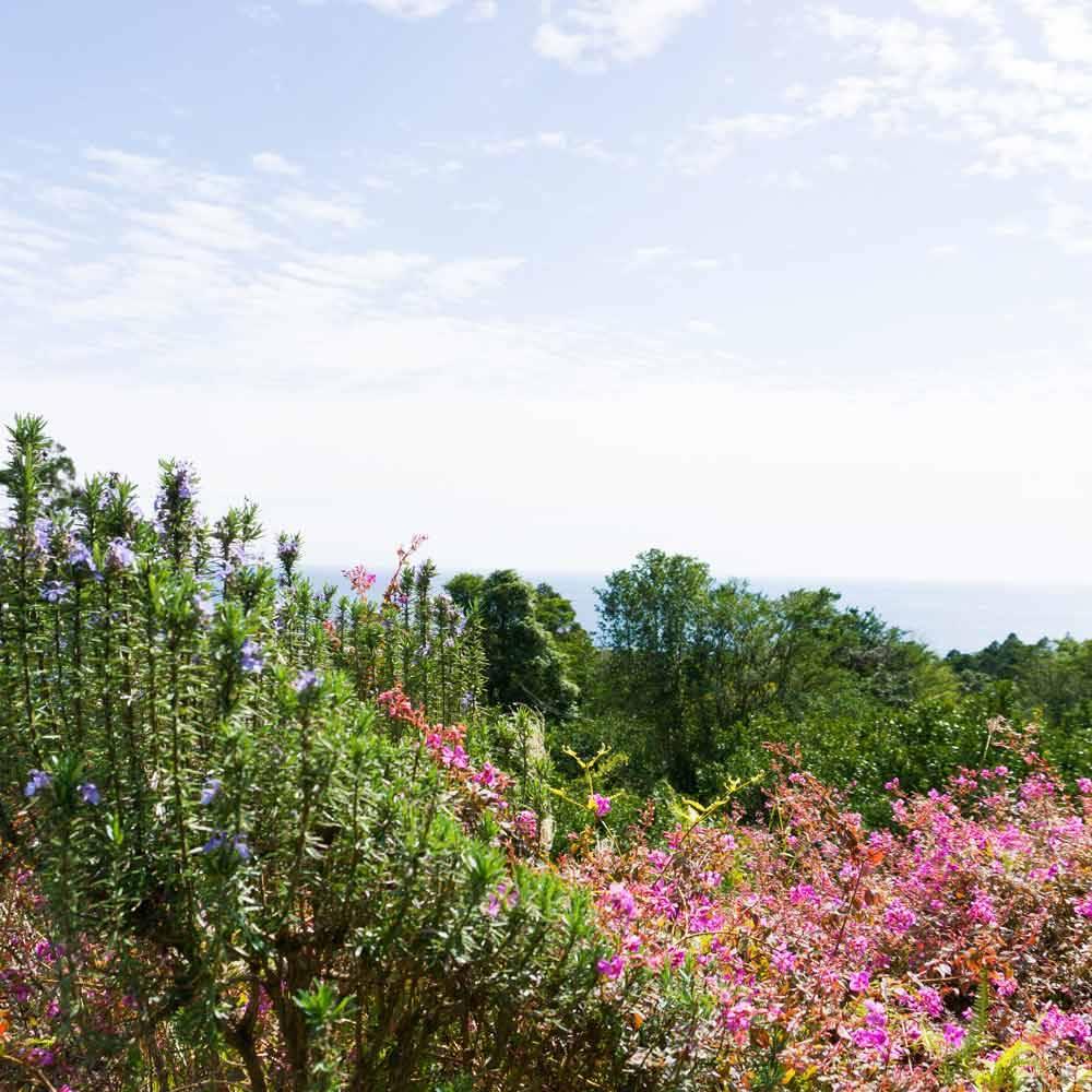 屋久島の花越しの海