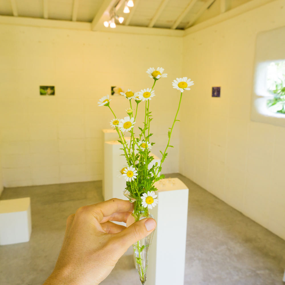 屋久島しずくギャラリー 季節の花とともに