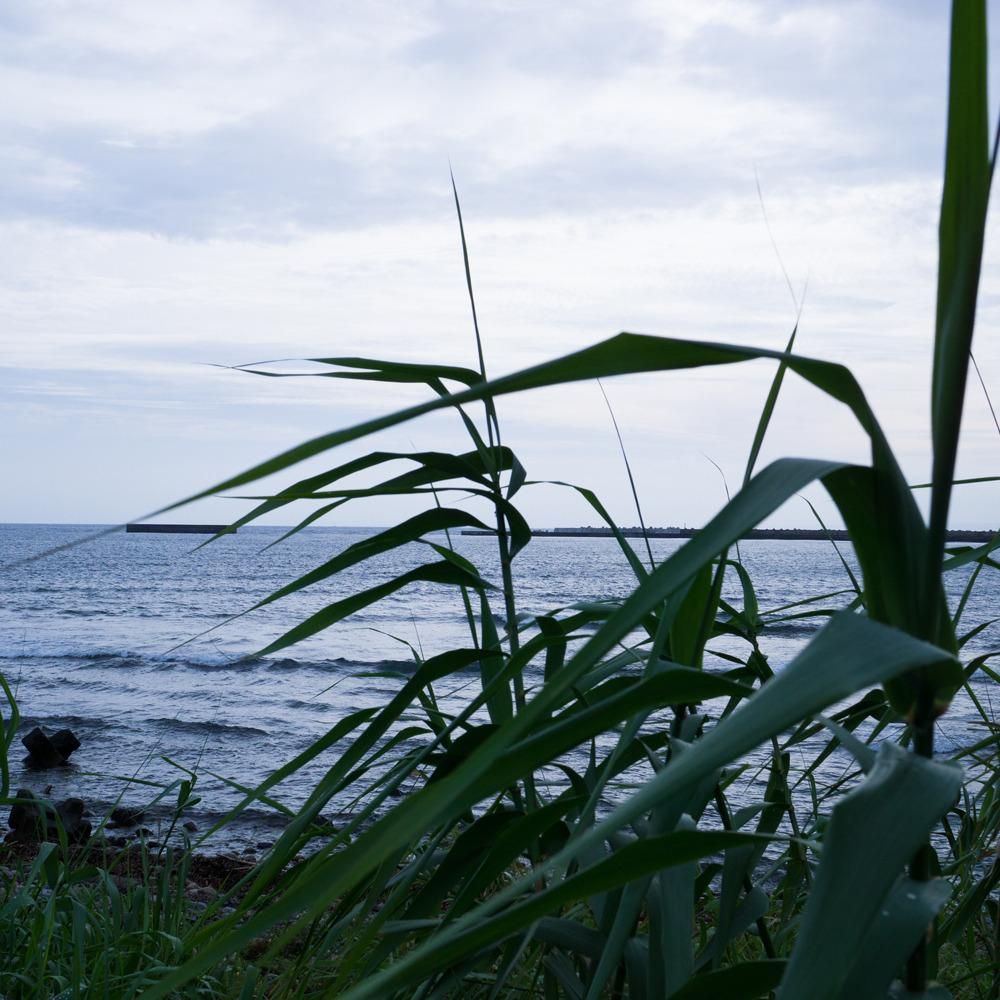 屋久島に来てから何度目の梅雨