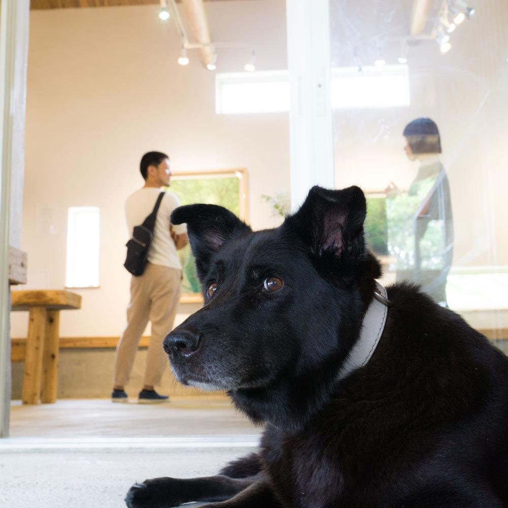 屋久島 ギャラリーtabira  高田裕子展 犬