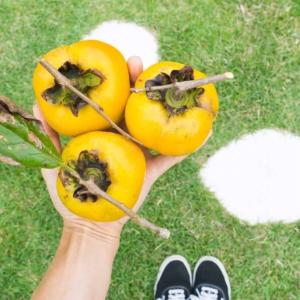 屋久島しずくギャラリーと柿