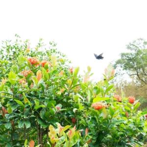 屋久島の蝶々