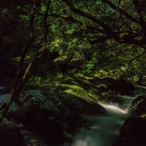 屋久島夜の森 川