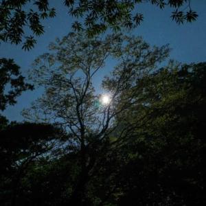 屋久島夜の森 月
