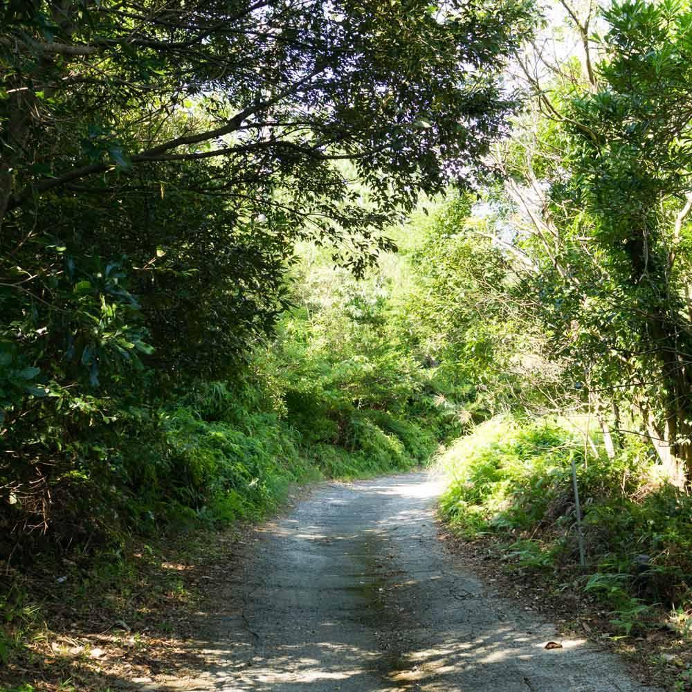 屋久島 散歩道