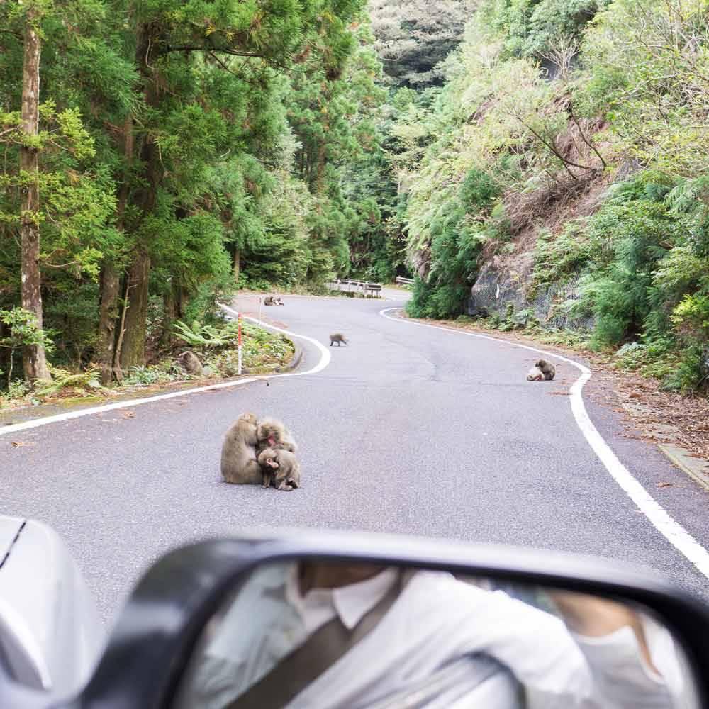 屋久島森の風景 屋久島の猿