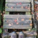 屋久島の森歩き 紅葉