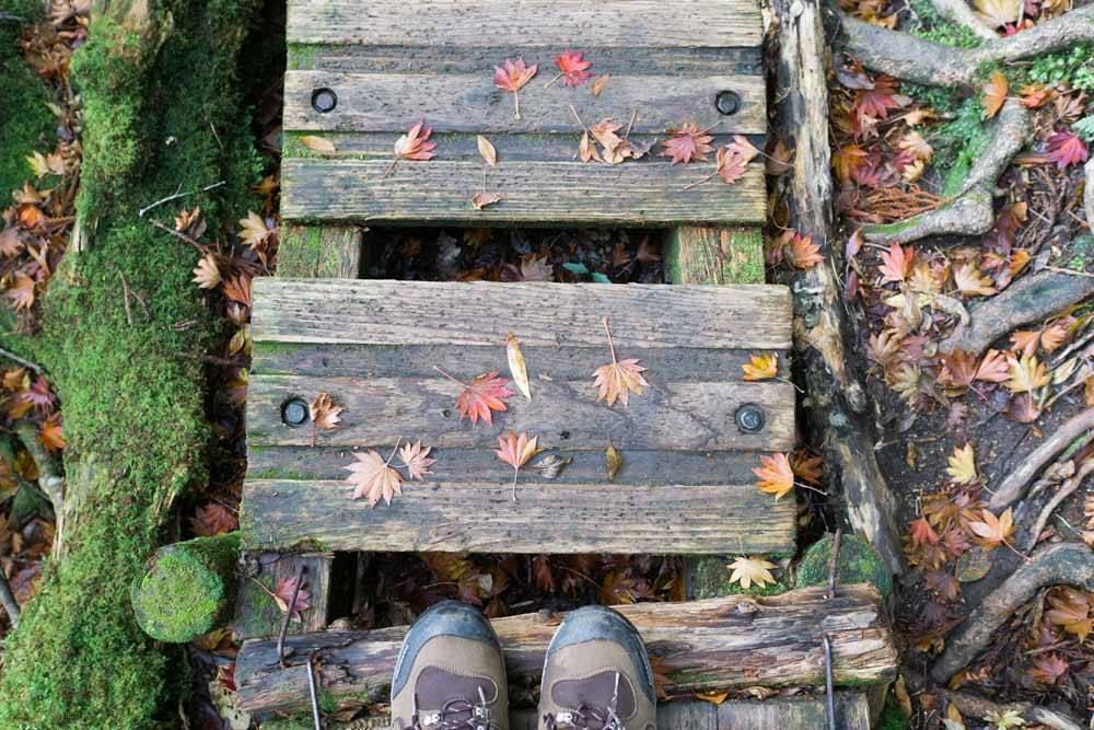 屋久島の森歩き