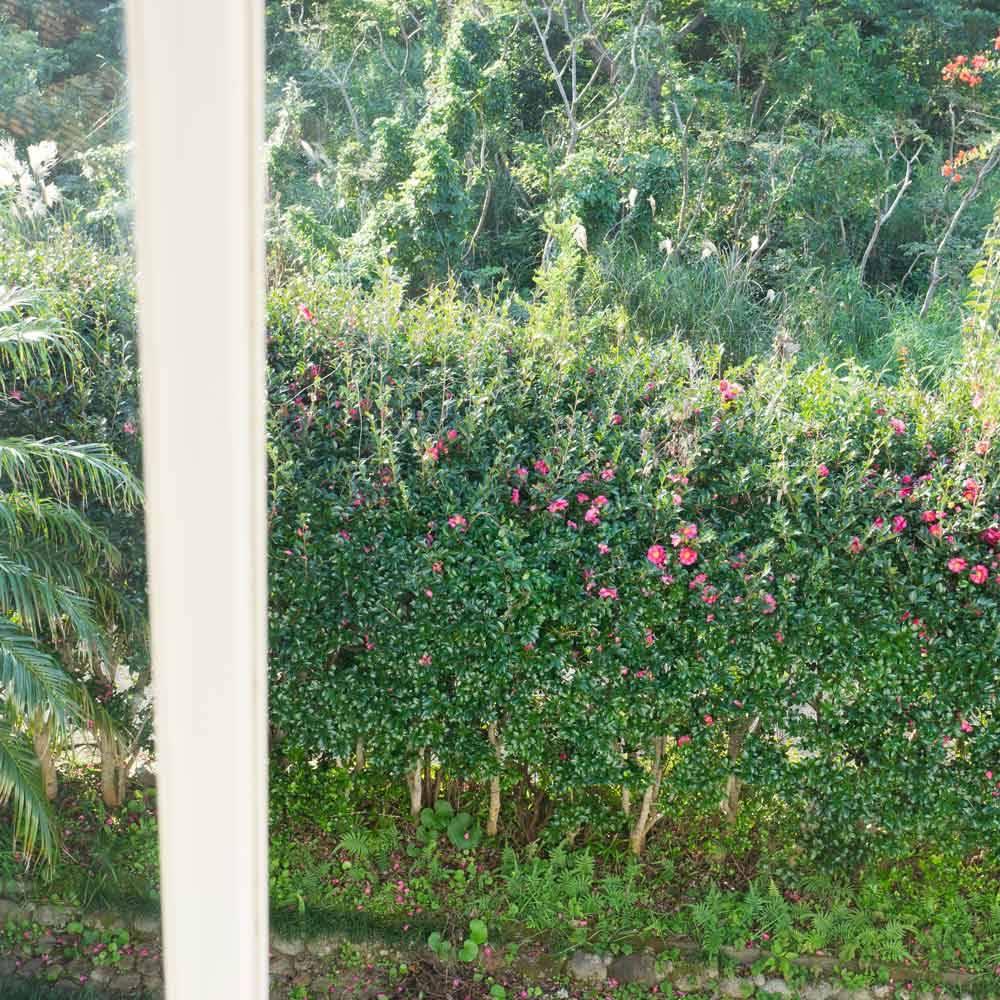ジュエリーのアトリエから 屋久島の山茶花