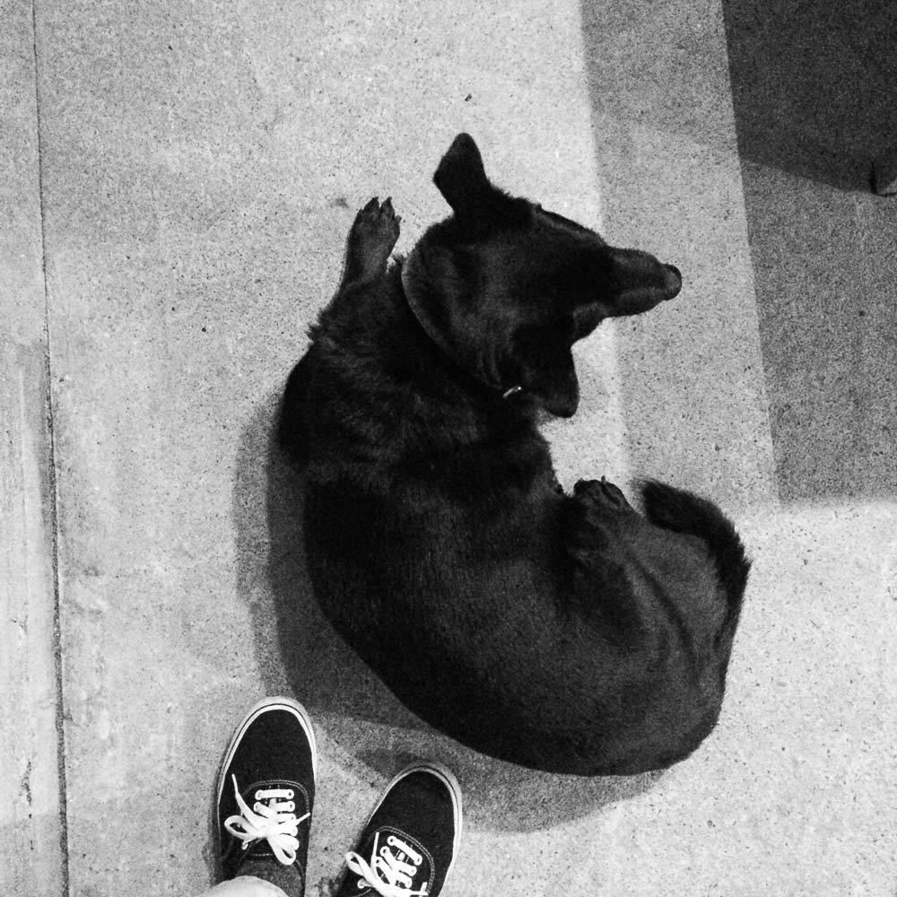 屋久島 ギャラリーtabira 犬