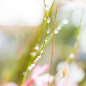 屋久島雨のしずく