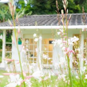 花に囲まれた屋久島しずくギャラリー