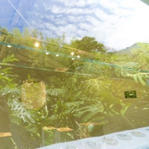 窓越しにしずくギャラリーの内観 窓に映る屋久島の空、緑